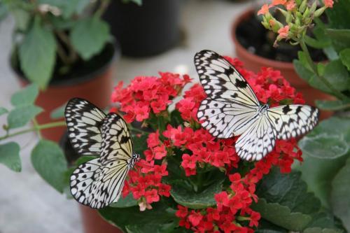 Виставка живих тропічних метеликів у Києві