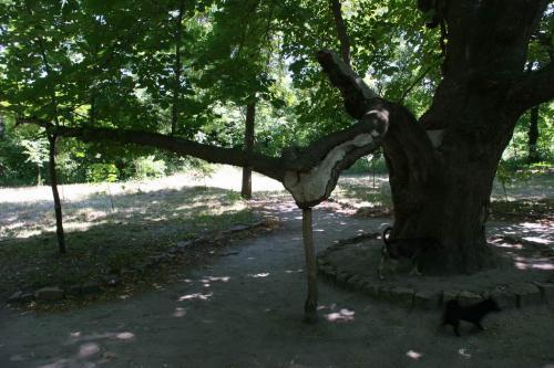 Интересный способ поддержать жизнь дерева