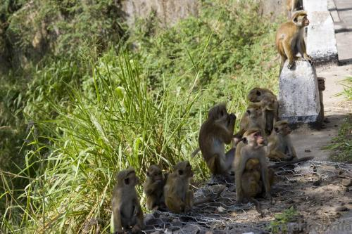Beggars along the road near Ravana Falls