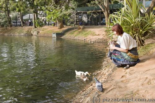 On the banks of artificial lake in Kandy