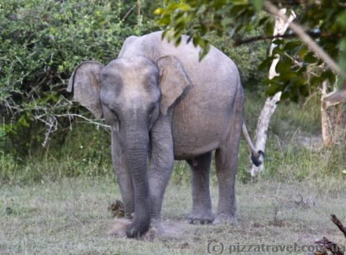 У парку багато слонів