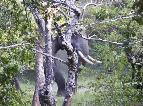 Дуже великий слон