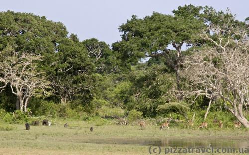 Деякі тварини не підходять близько та знаходяться на відстані приблизно 50 метрів.