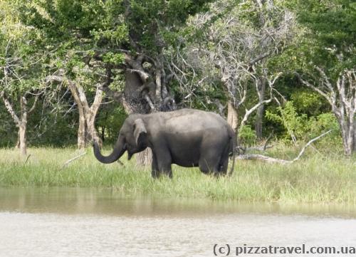 Слоник купається.