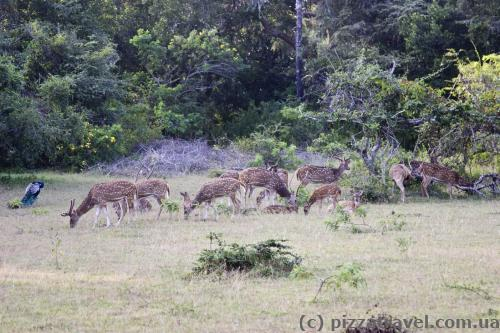 Deer are everywhere in the park.