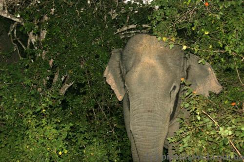 Вечоріло, я зробив знімок цього слона зі спалахом...