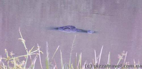 Знайдіть крокодила