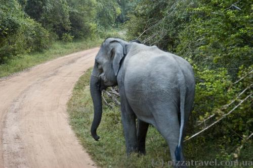 Sometimes elephants are on the road, you have to wait until they give way.