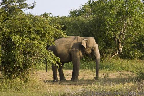 Cамотній слон