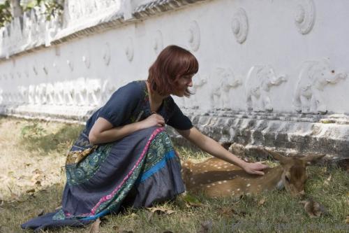 Олени на Шри-Ланке