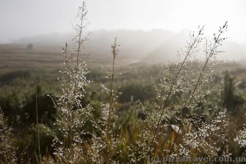 Утренняя роса на плато Хортон