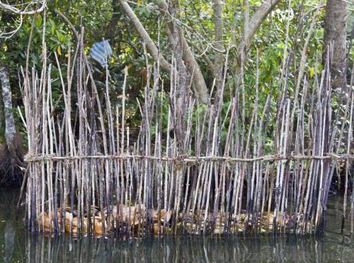 Специальные заводи для ловли рыбы
