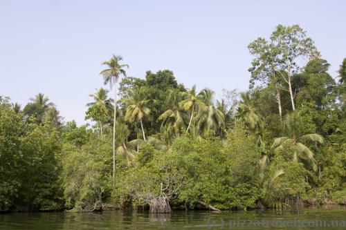 Берега реки Маду Ганга