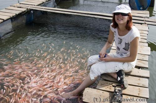 Fish peeling