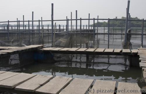 Место для разведения рыбы