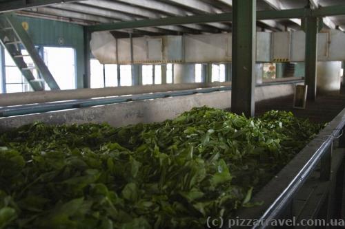 Чайна фабрика Mackwoods
