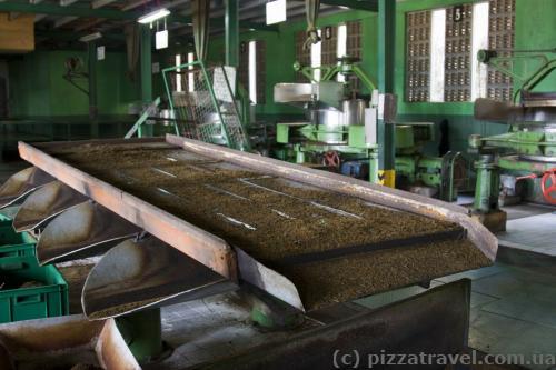 Чайная фабрика Mackwoods