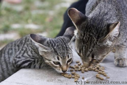 Будванські котики