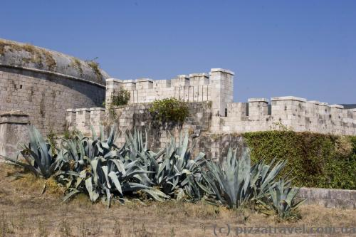 Agaves in the Mamula Fort