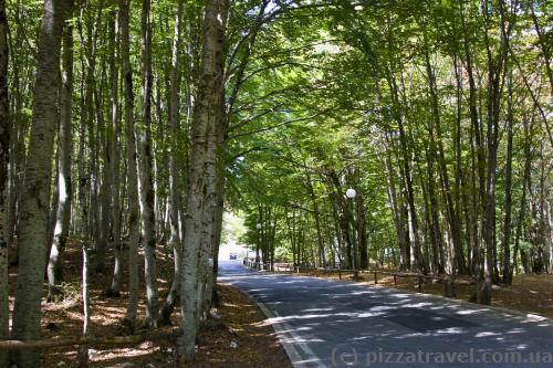 Road in the Lovcen National Park