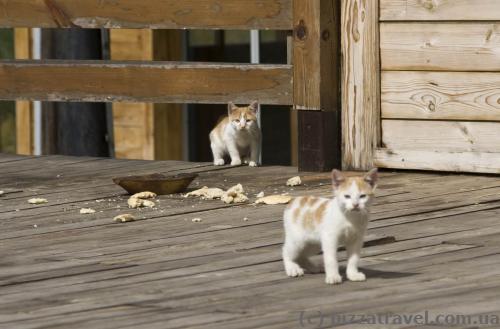 Летом в Колашине только коты