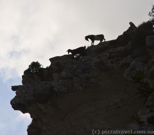 Будьте обережні, козли кидаються камінням згори