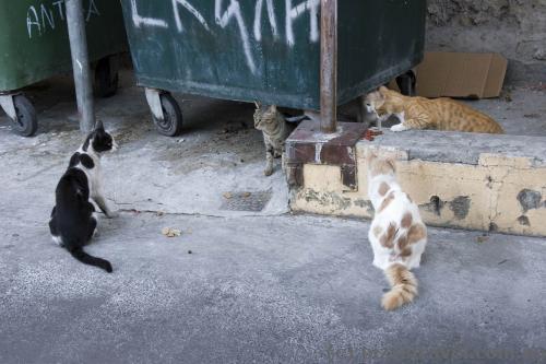 Котов в Никосии много, как и по всему Кипру