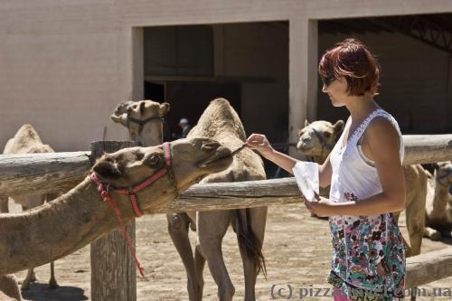 Парк верблюдів