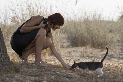 В археологическом парке Пафоса много котиков