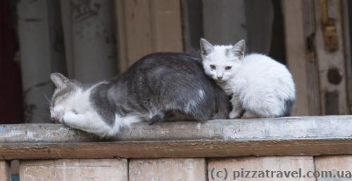 Тбилисские коты