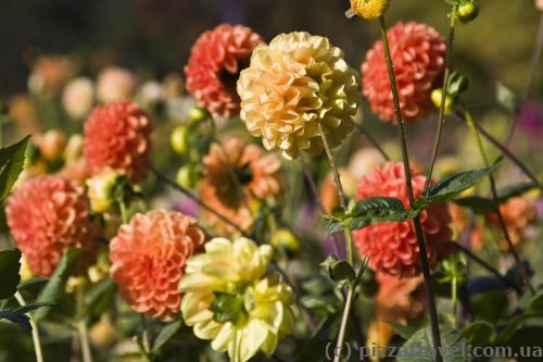 Цветы в парке Вестфален