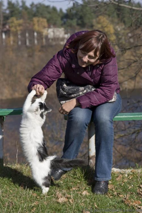 Playful cat near the Trygirskyi Monastery