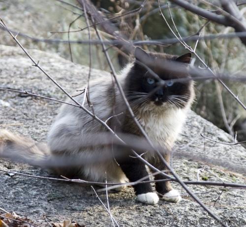 Кот в парке Островского в Коростене
