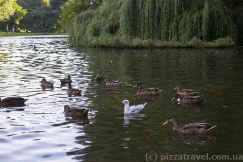 Парк Oosterpark в Амстердамі