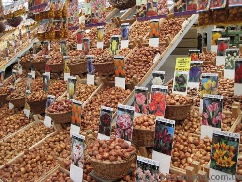 Квітковий ринок в Амстердамі