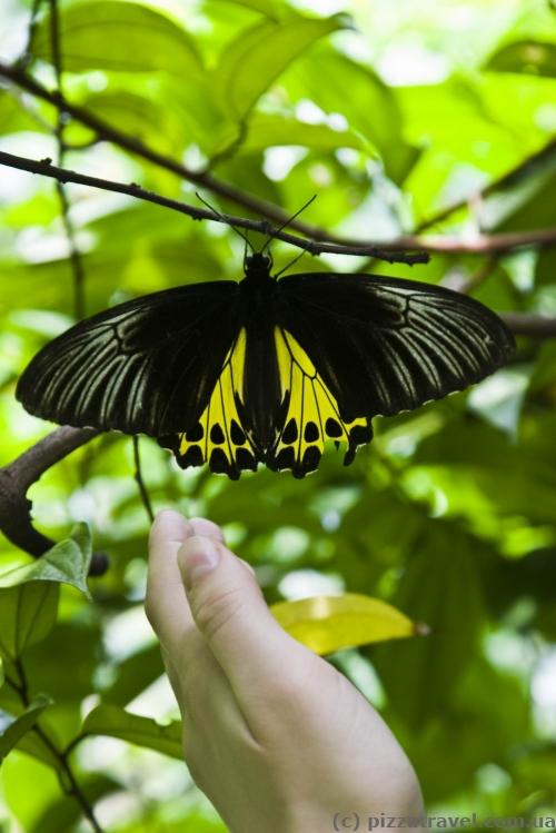 Парк метеликів у Куала-Лумпур