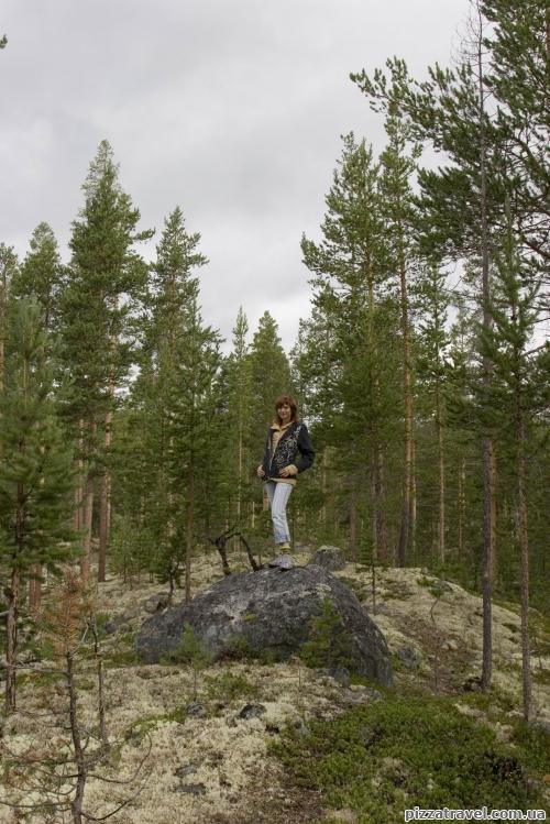 Ліс біля водоспаду Польфоссен