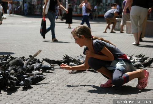 Pigeons on the Ban Jelacic Square in Zagreb