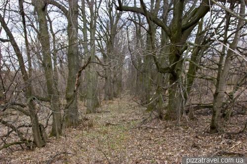 Покинута липова алея біля колишньої садиби Садових