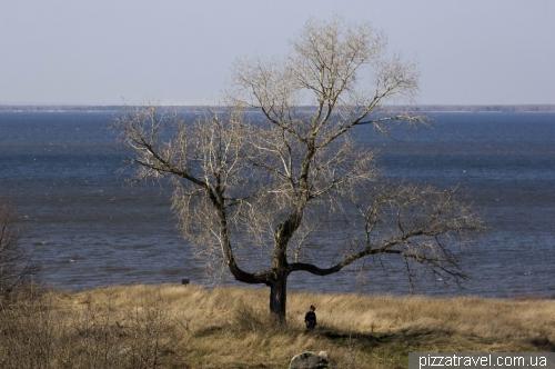 Tree-trident