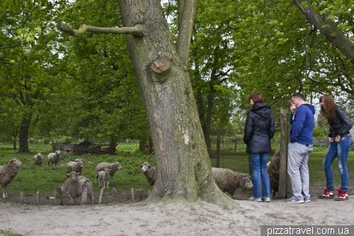 Зоопарк в Оброшино