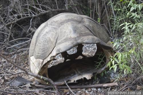 Empty tortoise shell