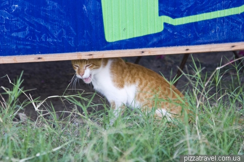 Кіт у Пуерто Вільяміль
