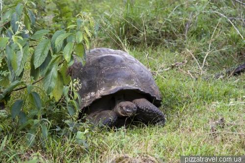 Черепаховий заповідник Ель Чато (Санта-Круз)