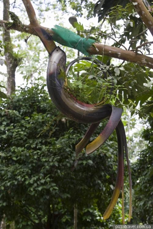 Парк Амазоніко в Тені
