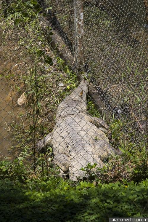 Центры по спасению животных в Эквадоре
