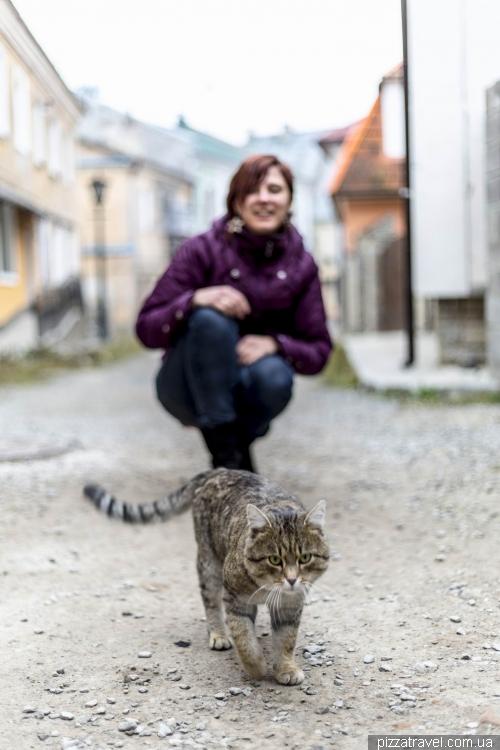 Кіт у старому місті Кам'янця-Подільського