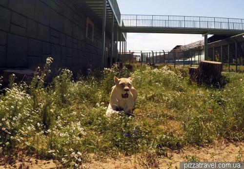 Зоопарк 12 місяців