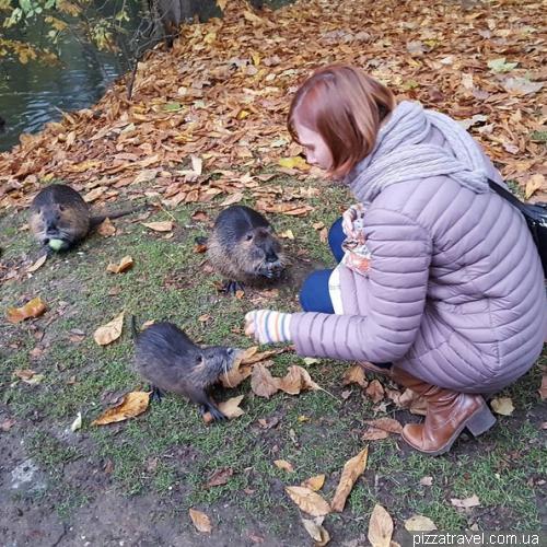 Нутрии в Brentanopark