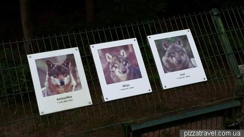 Вовчий розплідник в Дорвердені